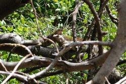 Iguana on Baradel island