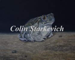 "Plains Spadefoot Toad (8 by 10"" oil on masonite) $325.00"