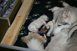 Anya's Pups 2007
