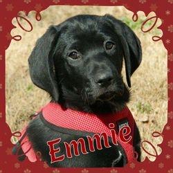 Emmie  ADOPTION PENDING!