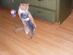 Kaylee jumps on Gus