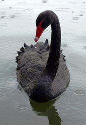Antipodean visitor!