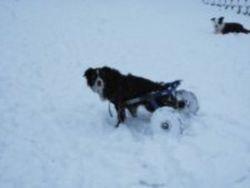 Snow Carting