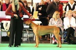 Limit Dog Class