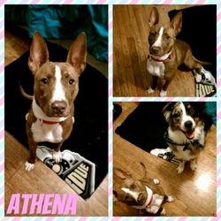 Athena (TN Foster)