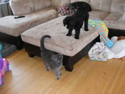 Vacak learned to play with dogs at TLC! Sampson loves cats!!
