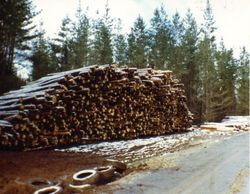 1989 'Not' the Alpine Rally @ Perkins Flat -  Tumut Road