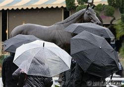 Seabiscuit Umbrellas