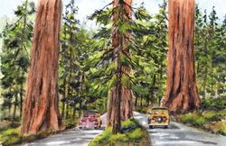 Passing Thru The Redwoods