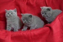 3 males