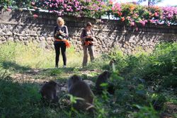 Grazing monkeys in the foreground and primatologists (Fany Brotcorne and Lucía Jorge Sales) in the background (Uluwatu, Bali, May 2016).