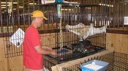 The cat cages in Cedar Rapids Iowa