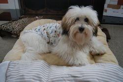 Tigg in his pajamas