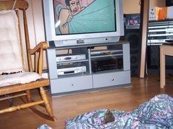 Ziggy/My Turtle watching cartoons