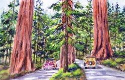 Redwoods & Woodies, Visalia
