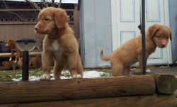 Orange girl, red girl and Echo in background showing the pups jumping.