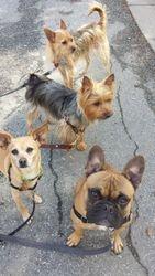 Arthur, Janney, Keala and Mojo