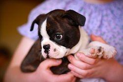 Cowboy as a puppy