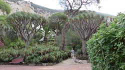 Gibraltar - Botanical Gardens