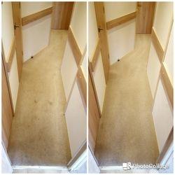 Carpet - mud