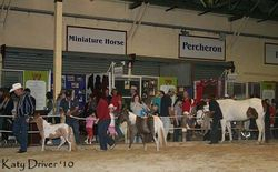 One of the pinto demonstrations in Horse Breeds Expo