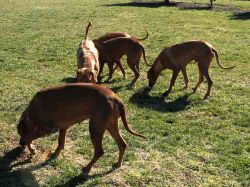 Calypso and her pack