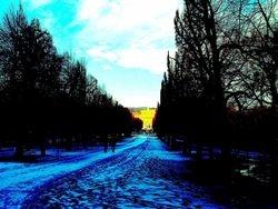 Schönbrunn avenue 1