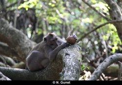 Coconut playing (Teluk Terima)
