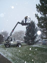 City Crew decorating tree