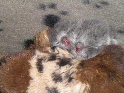 Snuggle babies.