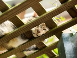 Our Garden Cat, Abigail