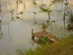 Muelle con patitos en el lago
