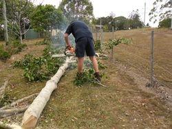 Tree Cutting 3