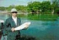 Florida Keys 10 lb. Bonefish May 1994