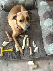 Lola's Bone Collection