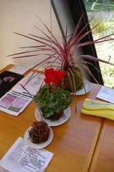 Sue Kingma's 3 fantasy pink mossballs with felt netting