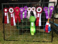 Rosettes at the HOTODGA show