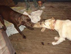 Baxter and Missie