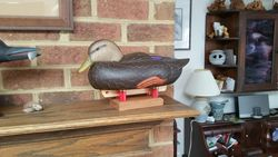 Reed Style Black Duck