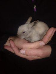 Tiny bunny!