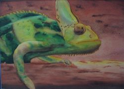 """Creeping Chameleon. Matted.  20"""" x 14""""  $90."""