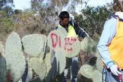 Die, Wheel Cactus, die!