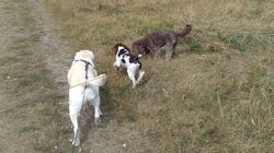 Out with Bonnie and a young puppy!