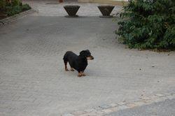Vakthund!!