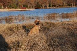 Ila at the lake