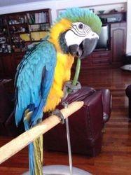 Pedro the Macaw