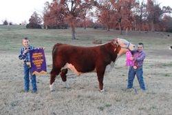 Grand and Supreme Bull NEA District Fair