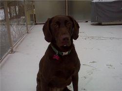 Sadie - 2 Years Old