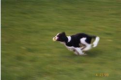 I am really fast.