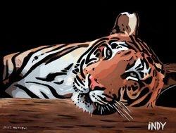 INDY  - 'Easy Tiger!'